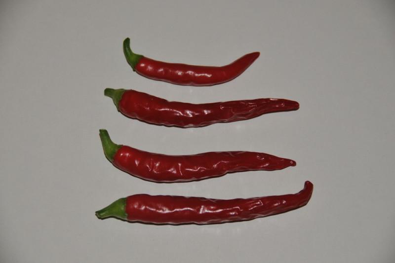 Chili Hot Joker  (Capsicum annuum)