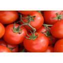 Tomat Matina (Lycopersicon lycopersicum)