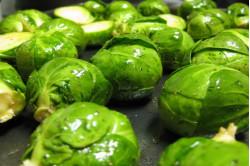 Rosenkål Windsor F1 (Brassica oleracea var. gemmifera)