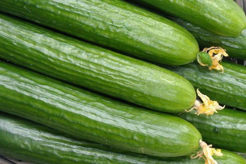 Agurk Perfection (Cucumber)