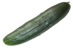 Agurk Marketmore (Cucumber)