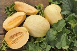Melon Emir F1 (Cucumis melo)