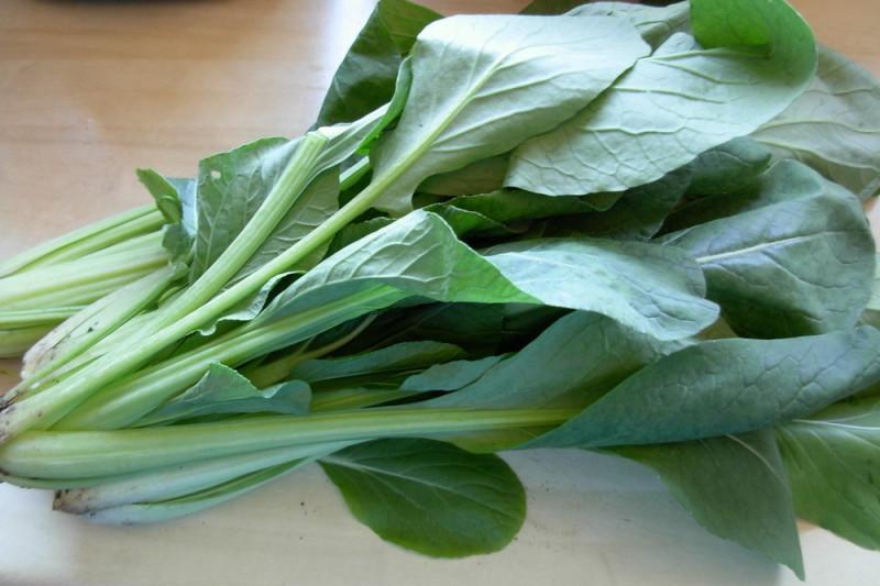 Komatsuna Comred F1 (Brassica rapa var komatsuna)