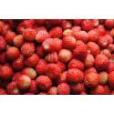 Skovjordbær Atilla (Fragaria vesca)