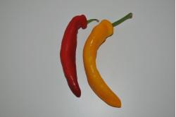Palermo Peber Mix (Capsicum annuum)