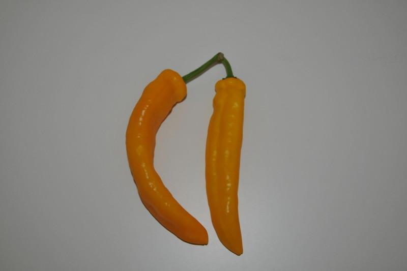 Palermo Peber Gul (Capsicum annuum)
