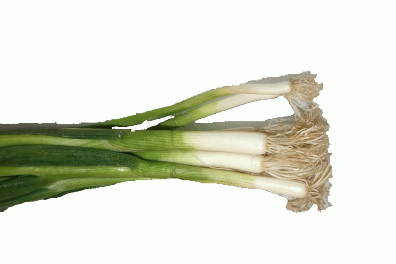 Forårsløg (Allium fistulosum)