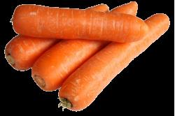 Gulerod Robila (Daucus carota)