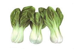 Pak Choi Yorokobi (Brassica...