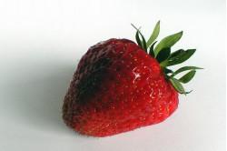 Jordbær (Strawberry)