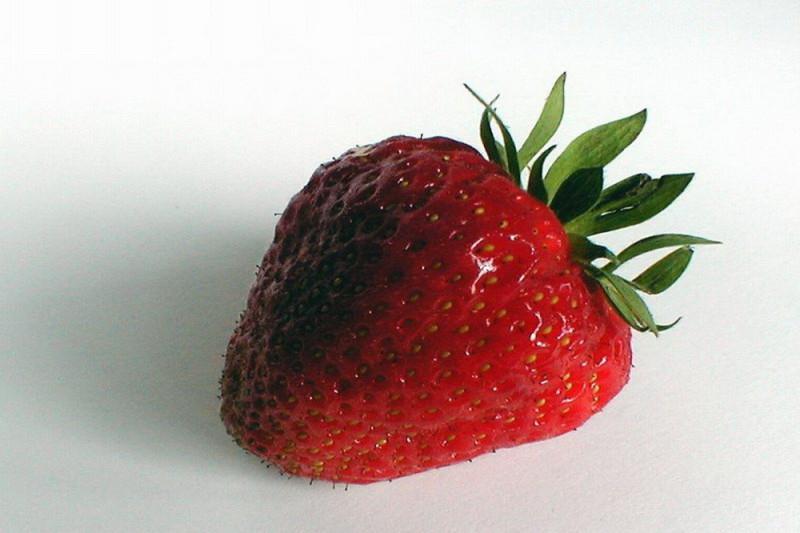 Jordbær Mignonette (Fragaria vesca)