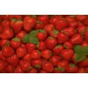 Jordbær Temptation (Fragaria x ananassa)