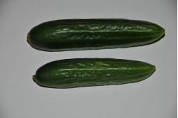 Skoleagurk Persika (Cucumber)