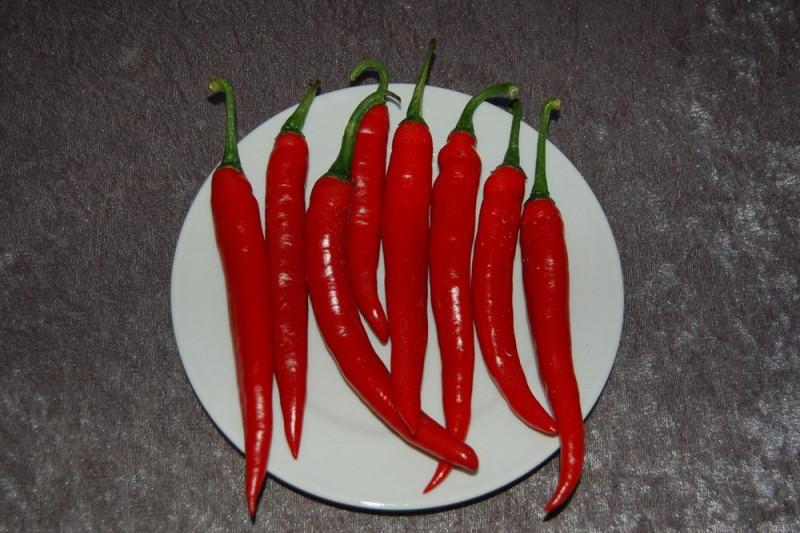Chilipeber (Capsicum annuum)