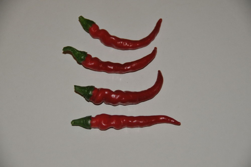 Chili Cayenne Long Slim (Capsicum annuum)