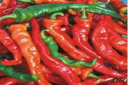 Chili Maules red (Capsicum Annuum)