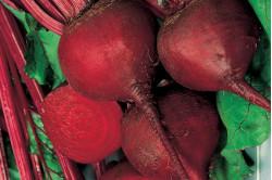 Rødbede Detroit 2 Crimson Globe (Beta vulgaris)