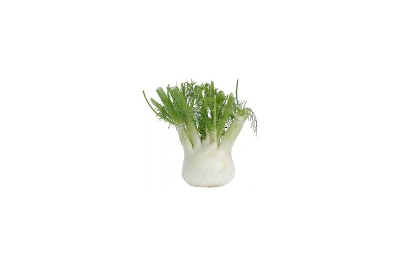 Fennikel Common (Herb fennikel common)