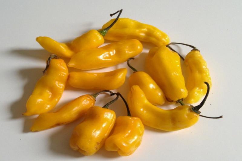 Chili Madame Jeanette (Capsicum Chinense)