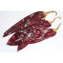 Chili Guajillo (Capsicum Annuum)