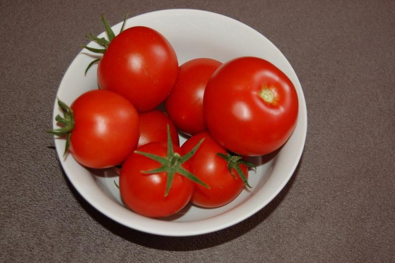 Tomat Moneymaker (Solanum lycopersicum)