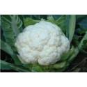 Blomkål (Brassica oleracea var. botrytis)