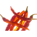 Chili Aji Red (Capsicum Baccatum)