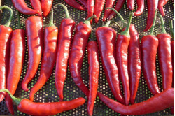 Chili Kim Chi (Capsicum Chinense)