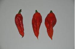 Bhut Jolokia Red (Capsicum Chinense)